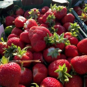 Red Barn Strawberries
