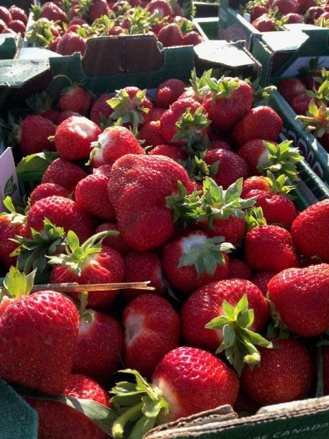 Red Barn Strawberries 3